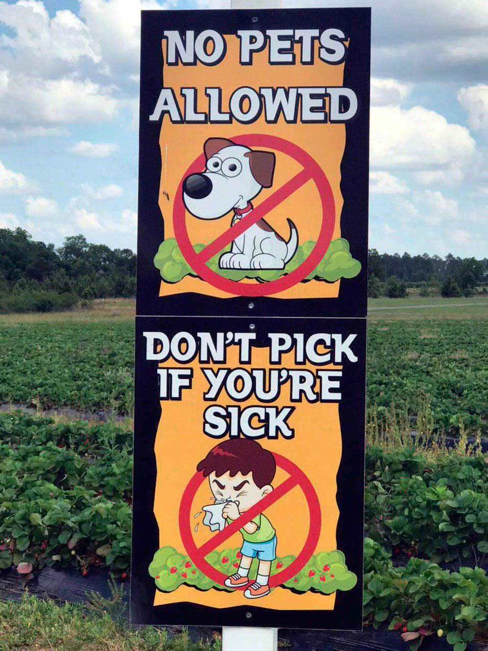 Strawberry Picking-sign on the field