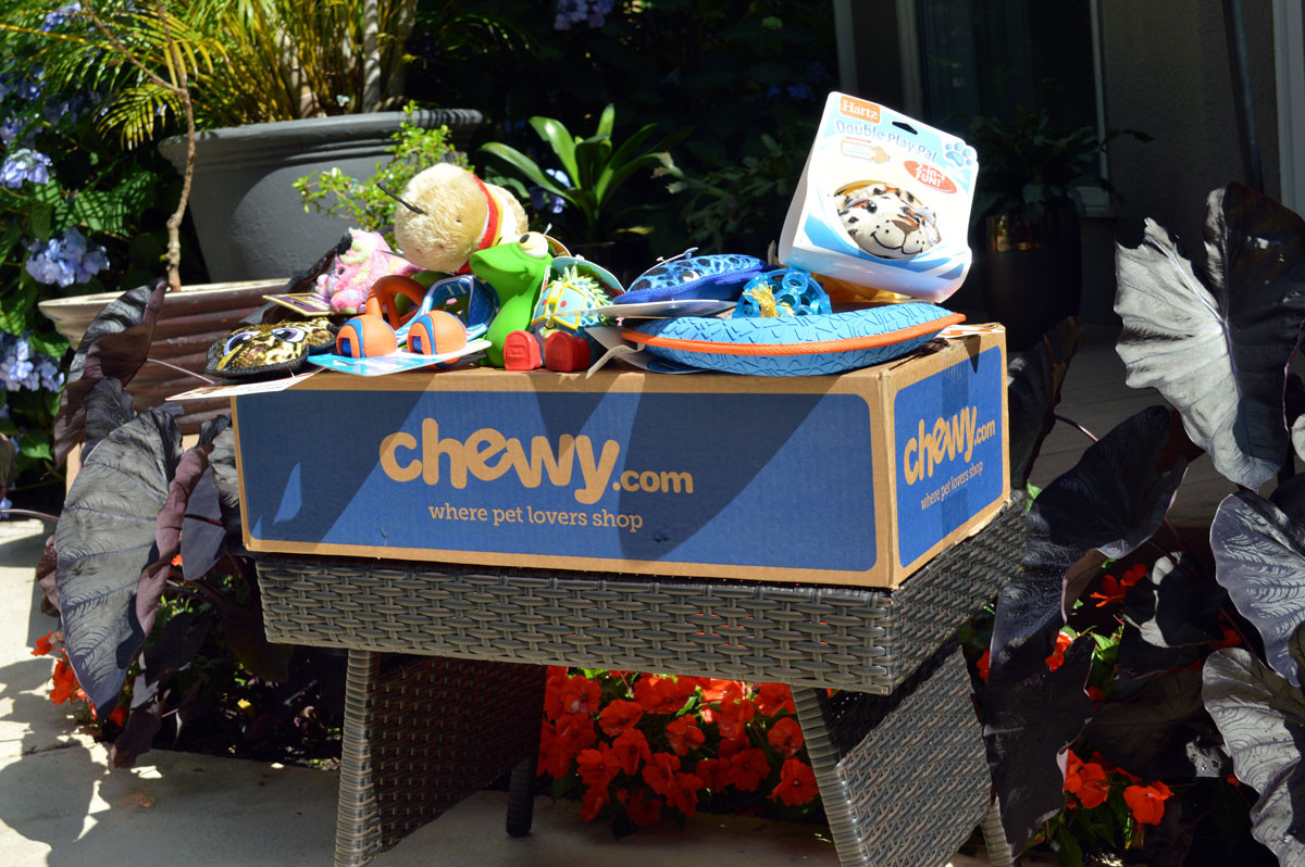 Chewy Discount Deals